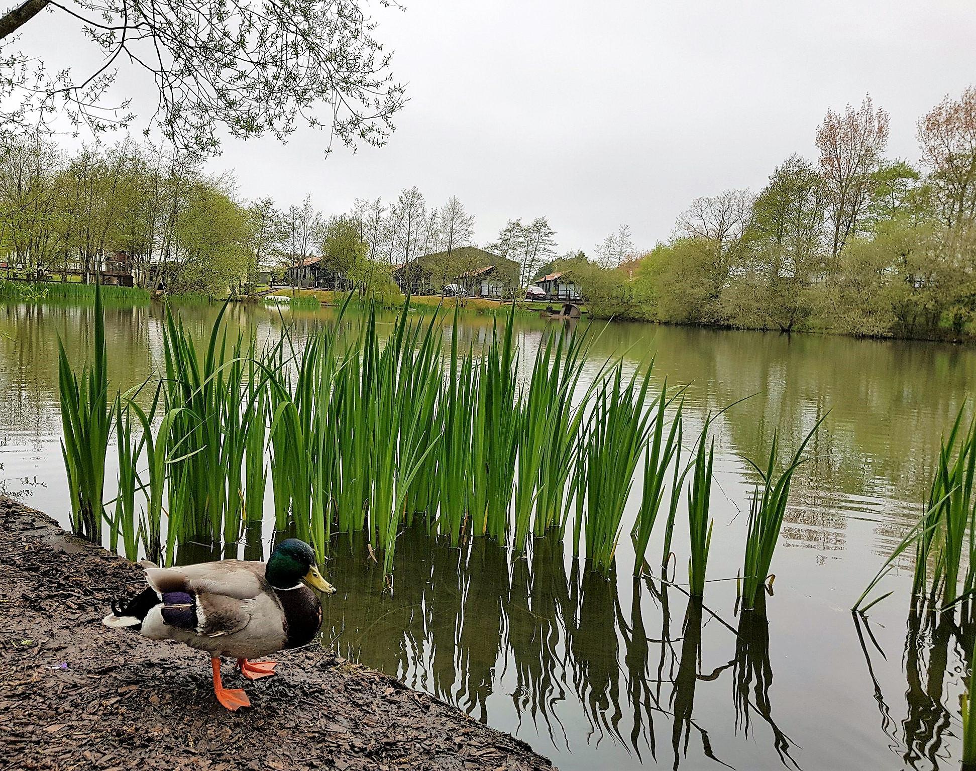 rookley park